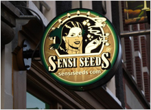 Sensi_Seeds_an_Amsterdam_Institution