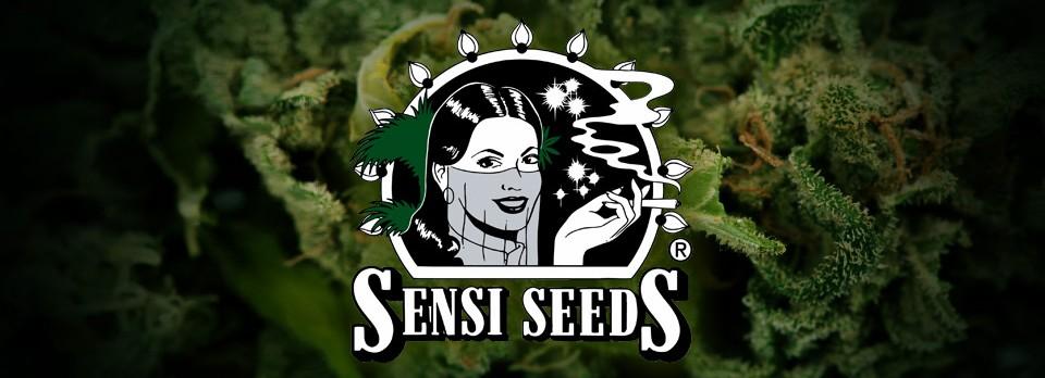 Sensi Seeds Bank | Sensi Seeds